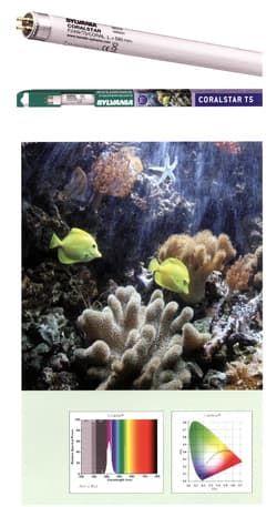 Лампа аквариумная SYLVANIA Т5L8 Coralstar 54Вт 120,0см