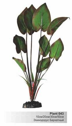 Шелковое растение Эхинодорус бархатный 10см  (Барбус)  Plant 043/10