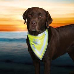 Бандана для собак со светоотр. рисунком, разм. XS-S, 30 х 13 см, 15 мм