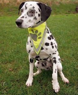 Бандана для собак со светоотр. рисунком, разм. XL, 62 х 33 см, 25 мм