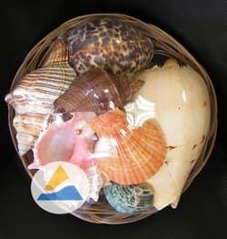 """Набор раковин в аквариум """"Фрукты моря"""" в корзинке (19см)"""
