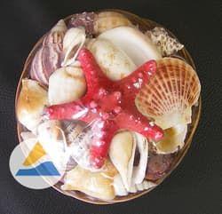 Набор раковин в корзинке для аквариума (15см)