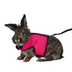 Шлейка с поводком для кроликов, 25-40см/1,20 м