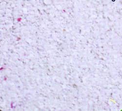 "Грунт аквариумный коралловый ""PHILIPINE SAND XS"" до 1мм 10кг"