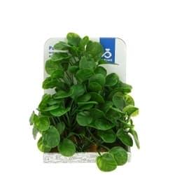 Растение пластиковое PRIME Лобелия 15см