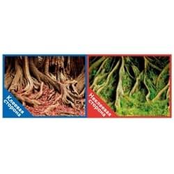 Фон двухсторонний с одной самоклеящейся стороной Корни с мохом/Корни с листьями 50x100см 8009/8010
