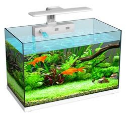 Аквариум Atman ZGT-60 75 литров, 60х33х39см (в комплекте внутренний фильтр, LED светильник, покровное стекло)