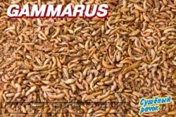 ГАММАРУС 100л/10000г- сушеный рачек (Gammarus pulex) корм для крупных рыб и водных черепах (мешок)