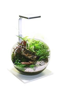 Флорариум Gloxy Flora 6,5 литров на подставке, цвет светлое дерево (в комплекте светильник 8 Ватт)