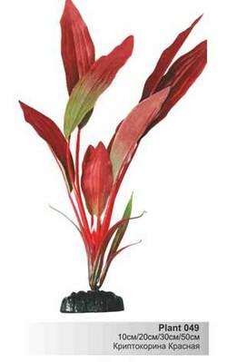 Шелковое растение Криптокорина красная 10см  (Барбус)  Plant 049/10